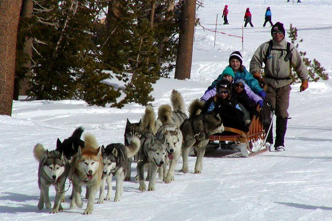 In recent years companies have been marketing tourist treks with #dog sledges for adventure travelers in snow regions as well. #Huskies are also today kept as #pets
