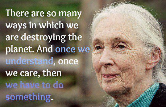 Jane Goodall Quotes Delectable 16 Best Gospel Of Goodall Images On Pinterest  Jane Goodall