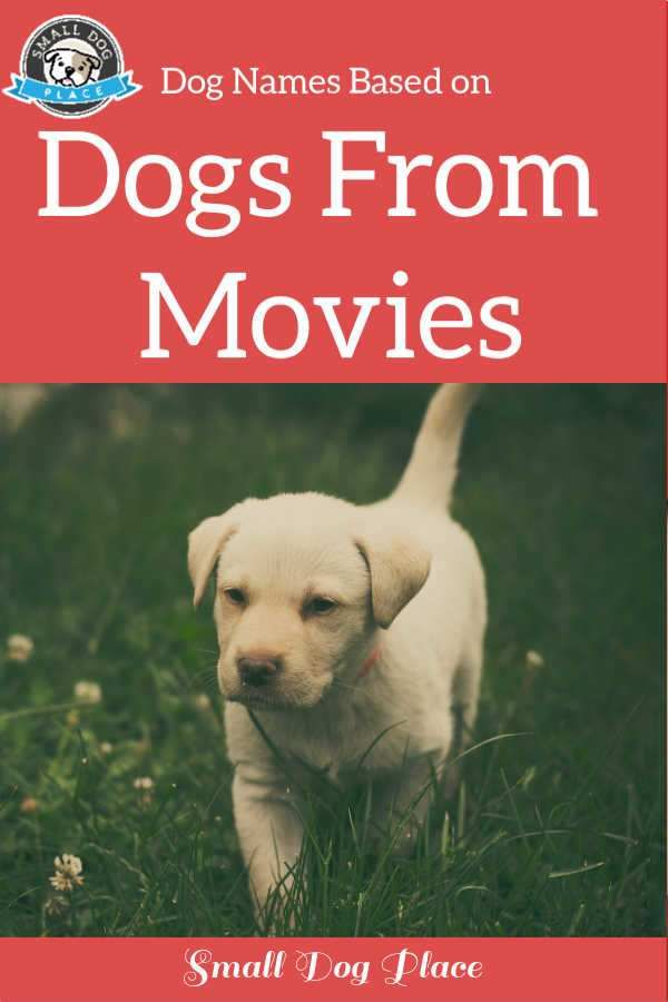 Dog Names From Movies Choose A Name Based On A Celebrity Dog In 2020 Dog Names Dogs Celebrity Dogs