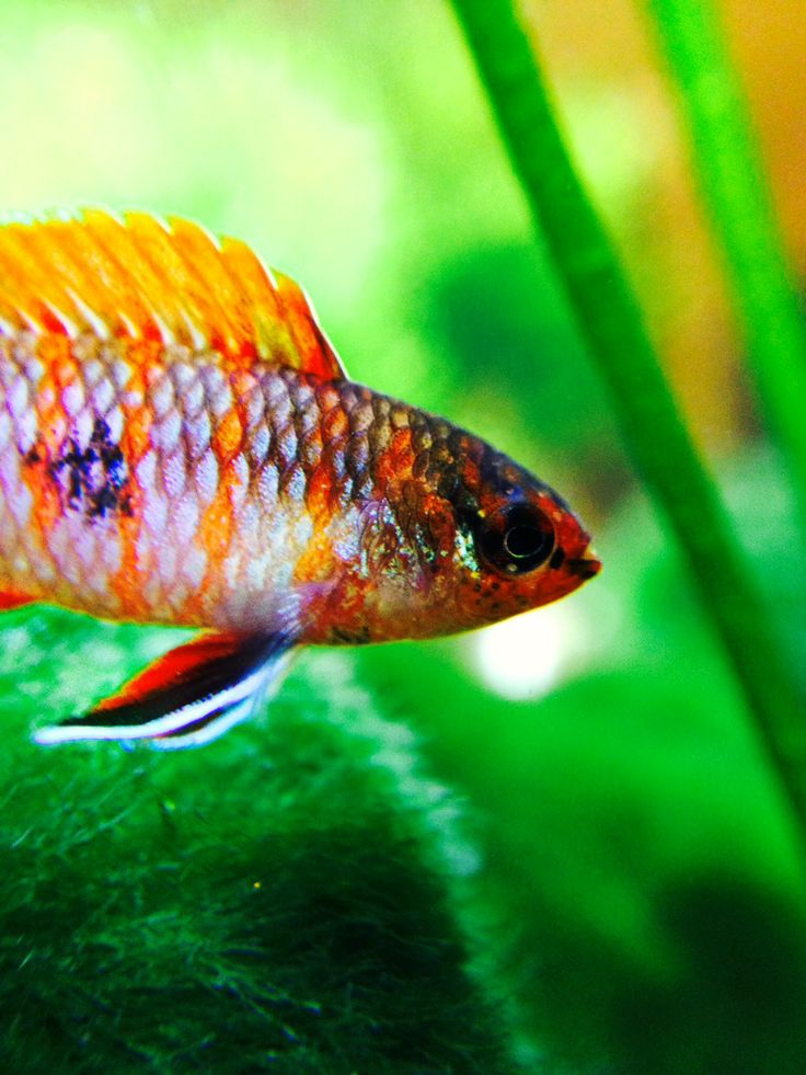 180 best images about nano fish tanks on pinterest
