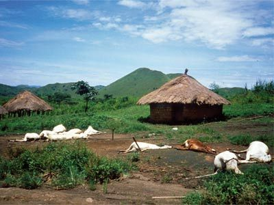 Lake Nyos, Cameroon, Gas Release August 21, 1986. Dead cattle surround compounds in Nyos village Sept. 3, 1986, almost two weeks after the lake's explosion.