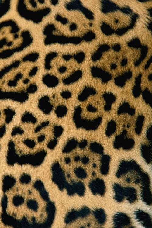 Leopard spots by National Geographic