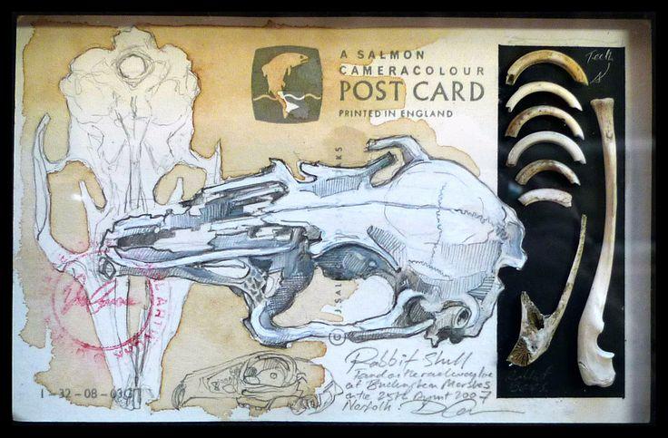 Natural History Postcard Rabbit Skull UK Artist Duncan Cameron www.duncancameron.org