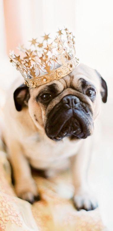 King Pug
