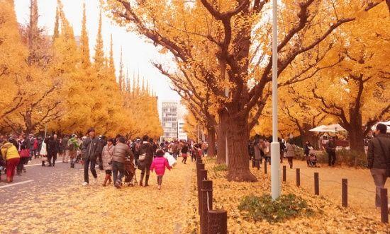 Tempat Momiji Terbaik di Tokyo, Taman Rikugien, Showa Kinen Koen, Koishikawa Korakuen, Yoyogi, Gunung Takao, Meiji Jingu, Akigawa, pemandangan musim gugur