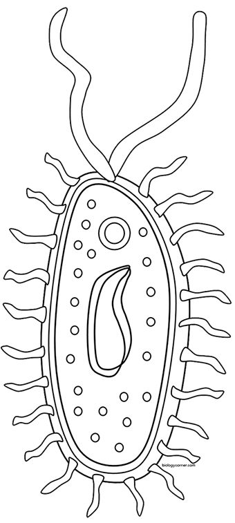 life science cells coloring pages - photo#15