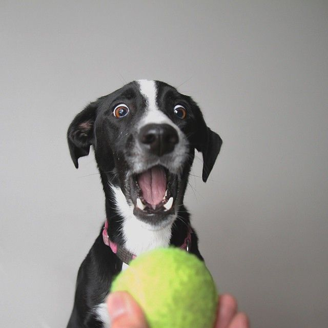 43 of the Happiest Dogs on the Internet