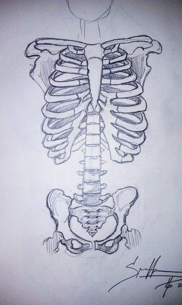 skeleton torso drawing -patch idea