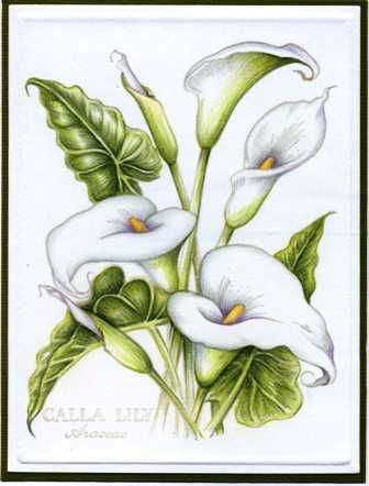 psx calla lily by Colorin' Kate - Cards and Paper Crafts at Splitcoaststampers