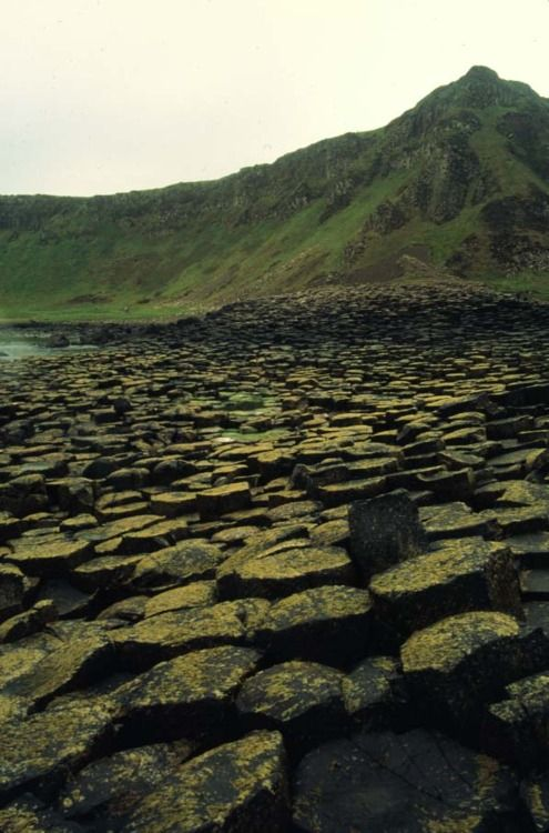 bytheswordinmyhand:   Giant's Causeway.  Ahhhhhh I miss this place