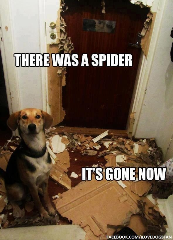 Puppy takes care of threatening spider by any means necessary :)