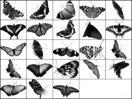 butterfly photoshop brush
