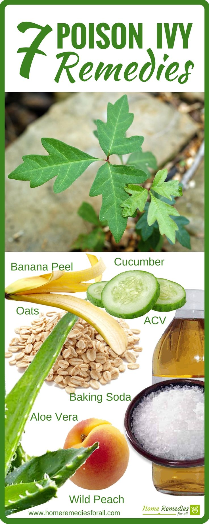 7 powerful and effective home remedies to heal poison ivy rashes.