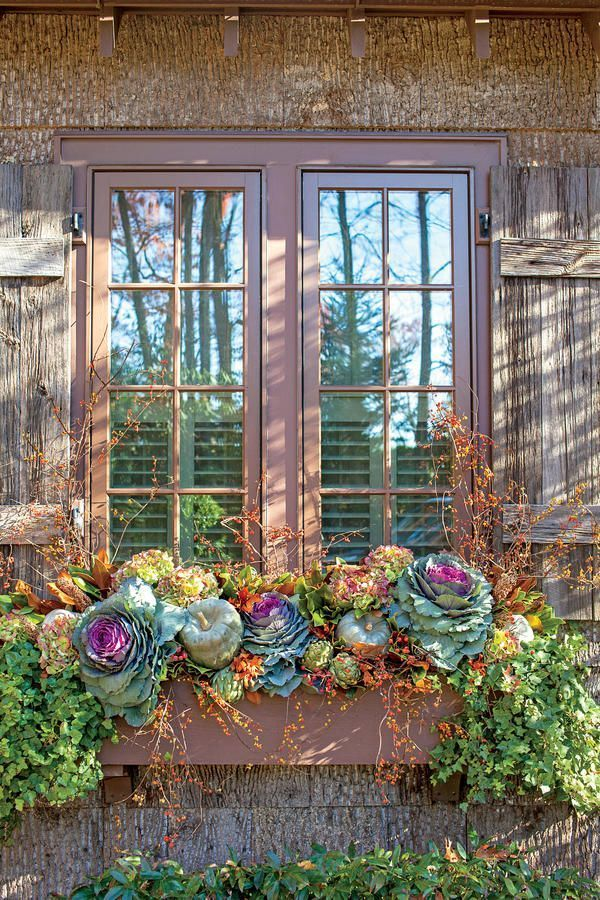 Transitional Window Box - Fabulous Fall Decorating Ideas - Southernliving. Plan ahead for plantings that will transition through the holidays with a few additions. Start with ornamental cabbage, bittersweet, pumpkins, dried hydrangeas, artichokes, and ivy, then add in gilded branches and berries to suit the season. Tip: To withstand October's lower temps, plant window boxes with cold-hardy cabbages and ivy. Add the largest items first