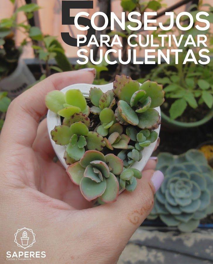 5 consejos para #cultivar suculentas Cuidar nuestras #plantas #suculentas no es difícil, sin embargo, conviene tener en cuenta esta información. ¡Apúntala!