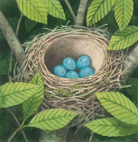 Thomas Mueller | Illustrationen | Vogelnest