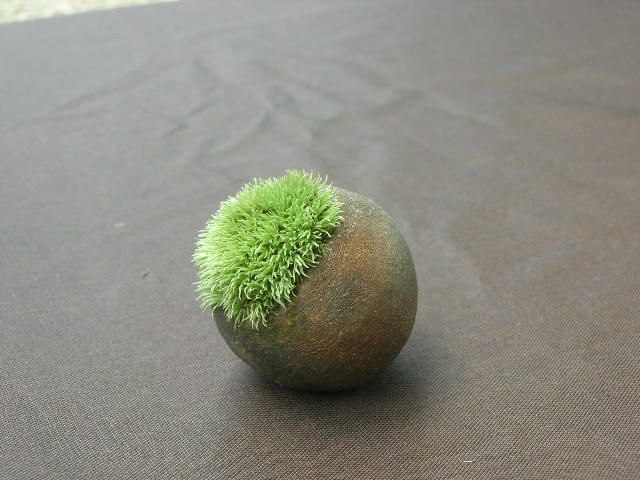 Interior moss ya a little green Simple but moss Bon our protagonist is tasteful moss.
