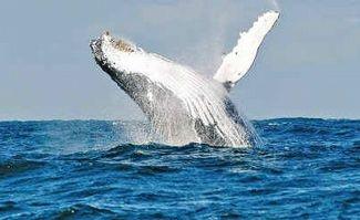 whales! byron bay