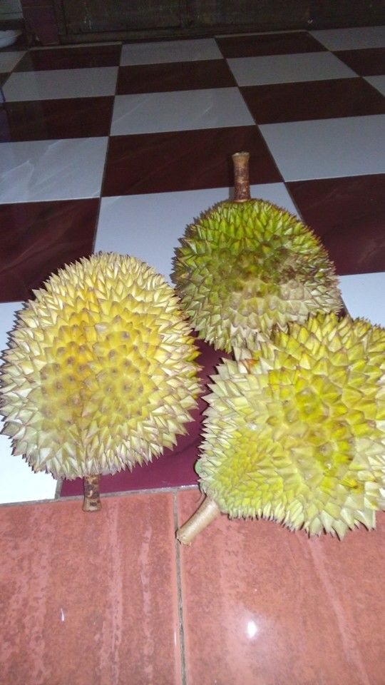 Durian tropical fruit