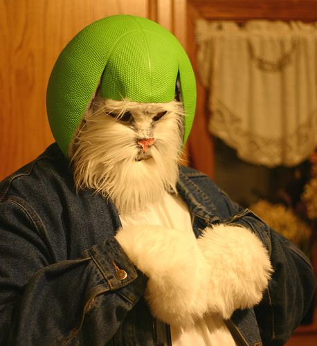Lime helmet cat