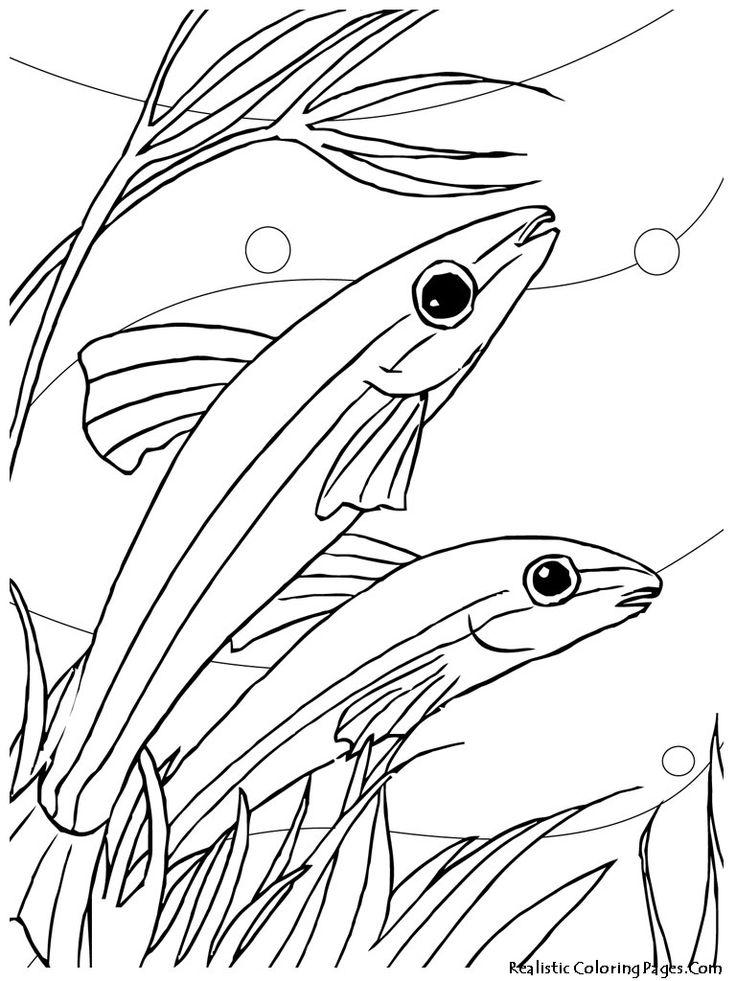95 best images about Color Fish