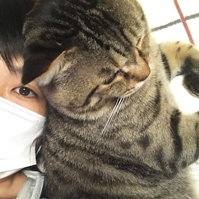 陽斗が来てから👶 いつも以上に激しく甘えるスメさん🐱ヤキモチ?? ※私は元気ですが主人が風邪っぽいと言うので💦 母乳育児中だし…念の為マスク着用😷 #猫#ねこ#にゃんすたぐらむ #猫部#ねこ部#元ボス猫#保護猫#飼い猫#愛猫#ペット#家族#ボス猫#キジトラ#ジャパニーズボブテイル#猫白血病キャリア#猫エイズキャリア#かわいい#長生きしてね#日常#甘える#飼い主#添い寝