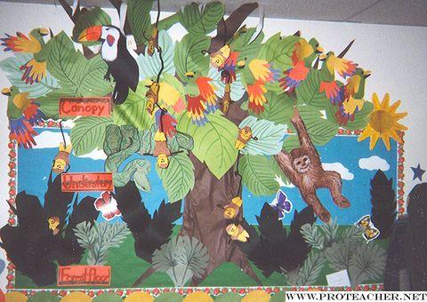 Science: Rainforest Kapok Tree Bulletin Board