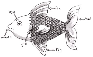Something Fishy Project for Memoirs of a Goldfish