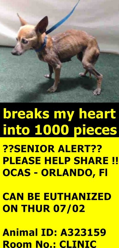 Hi, I am an approximately 10 year old brown female. I am friendly and I have not been tested for heartworms. I weigh approximately 6 pounds. I have been at Orange County Animal Services since Thursday, June 25, 2015. My due out date is Thursday, July 02, 2015. Orange County Animal Services 2769 Conroy Rd. Orlando, Fl AnimalServices@ocfl.net (407) 836-3111 (407) 254-9140 https://www.facebook.com/photo.php?fbid=438204689674730&set=a.254488231379711.1073741825.100004556077636&type=1