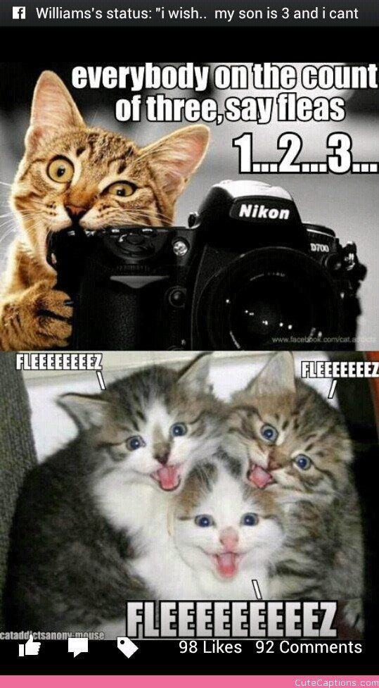 1…2…3…fleaz Cute Captions Funny cats, Funny animal