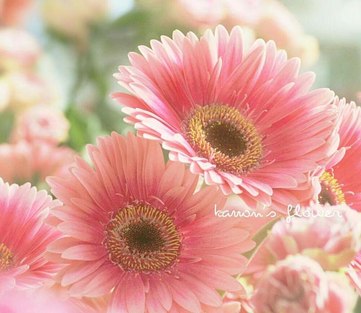 窓辺の画像 by 香音さん | 窓辺と大人ガーベラコンテストと花が好きと今日のお花と今日の一枚と可愛いピンク色♡