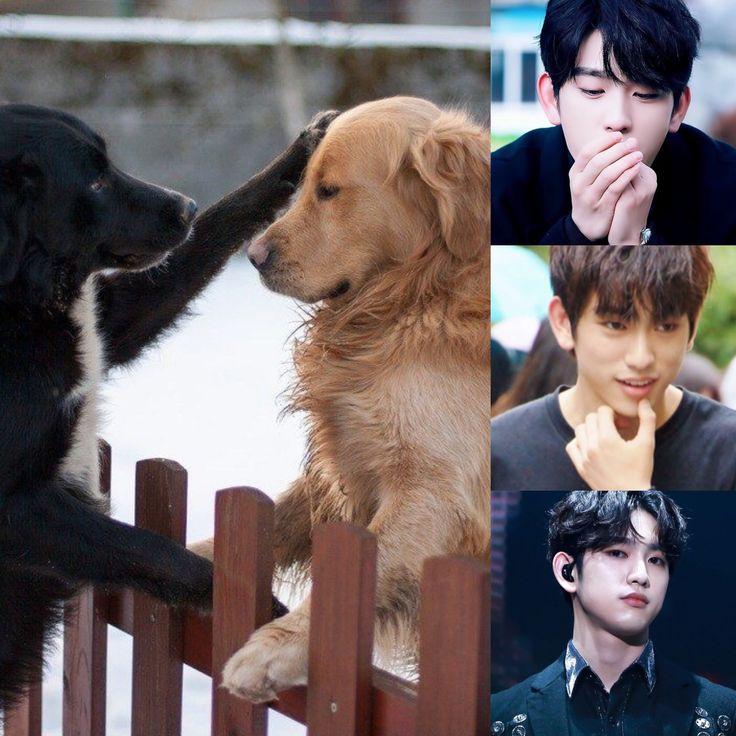 ChineseZodiac&KPOP // Dog // Jinyoung of GOT7