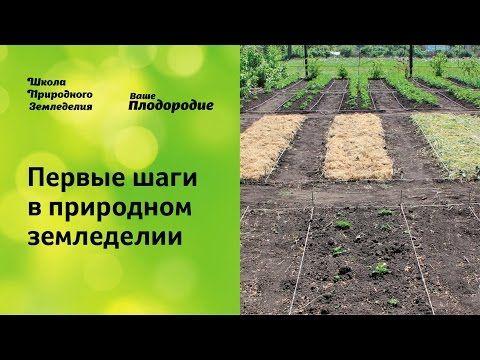 Первые шаги в природном земледелии - YouTube