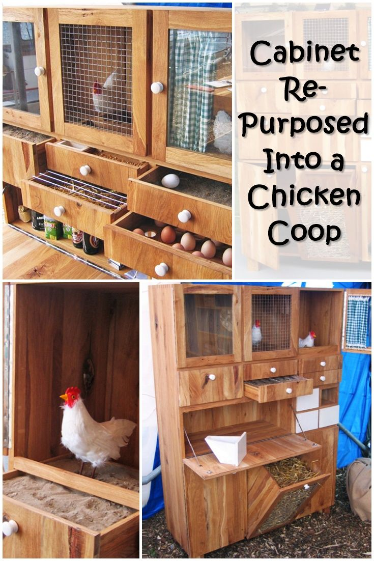 How To Build A Chicken Coop | Building a chicken coop, Egg ...