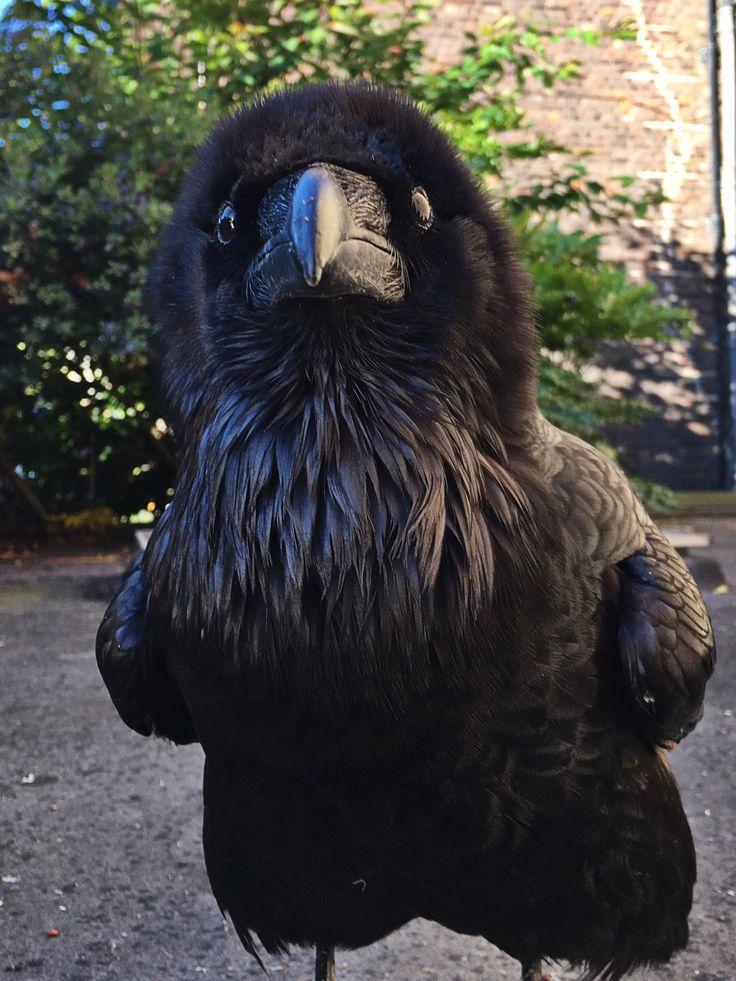 """Ravenmaster on Twitter: """"https://t.co/widuDRlbVW"""""""