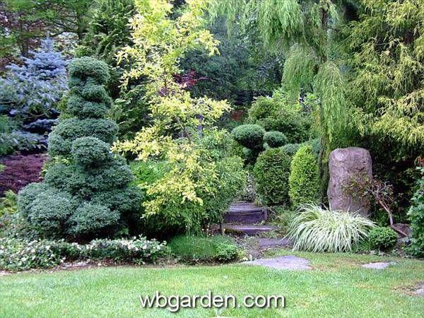 266 Best Images About Dwarf Conifers On Pinterest
