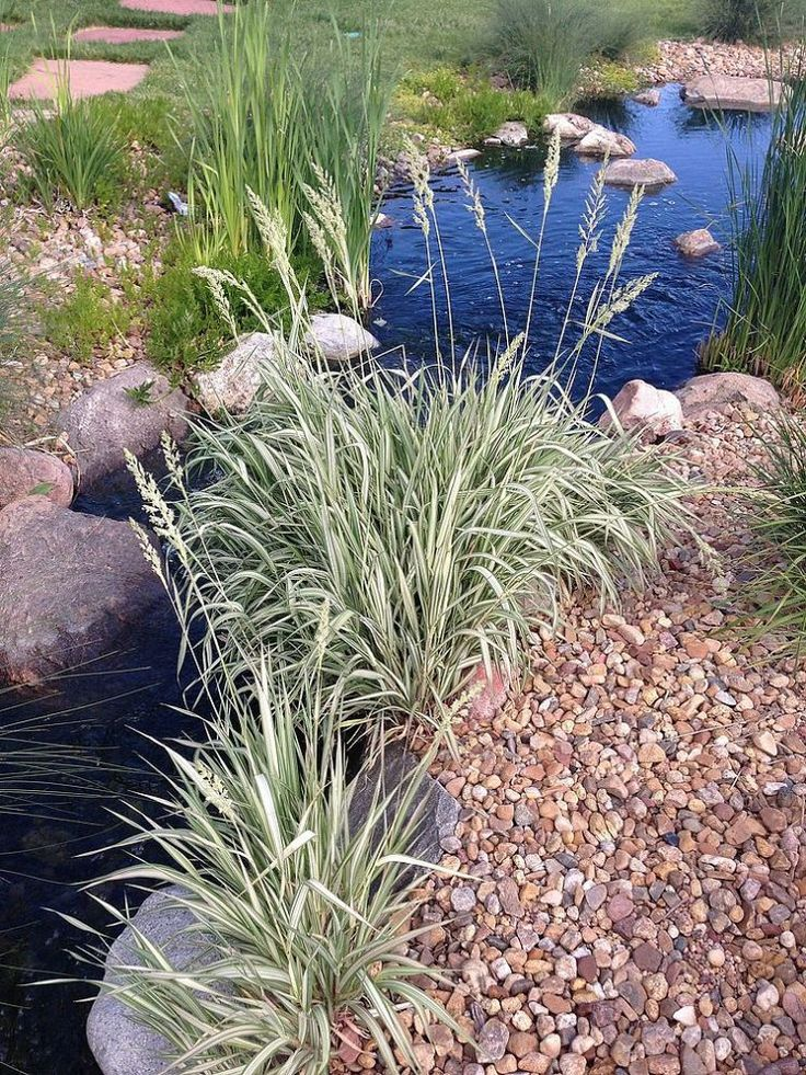 17 best images about ponds on pinterest straws backyard for Koi pool water gardens thornton