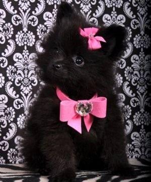 cachorro laço rosa