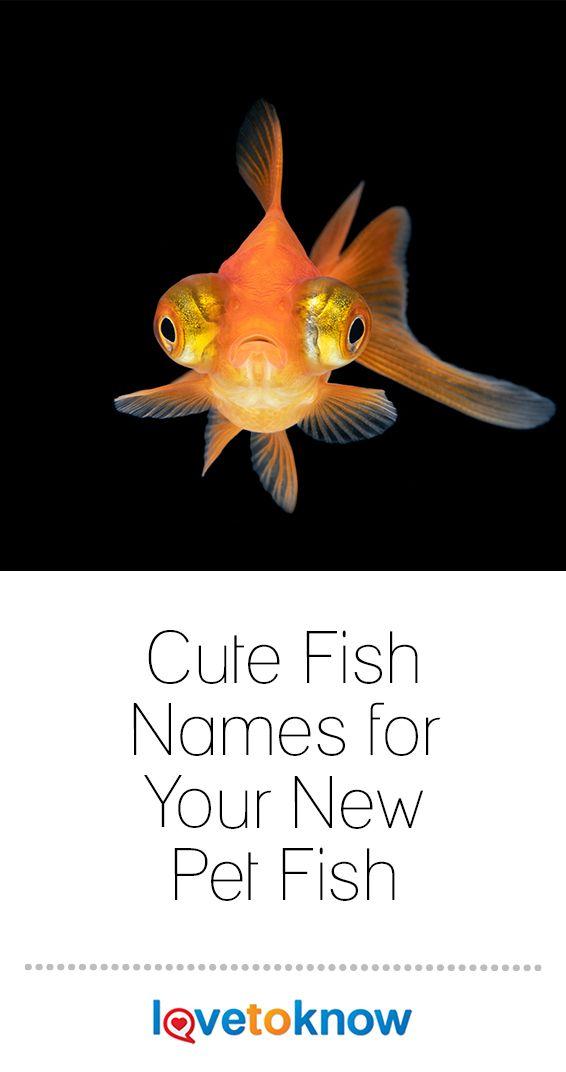 Cute Fish Names For Your New Pet Fish Pet Fish Cute Fish Pets