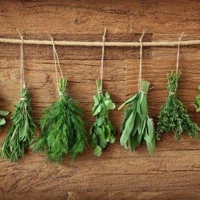 Здавна відома лікувальна сила трав, яка ціниться та використовується у цілому світі.
