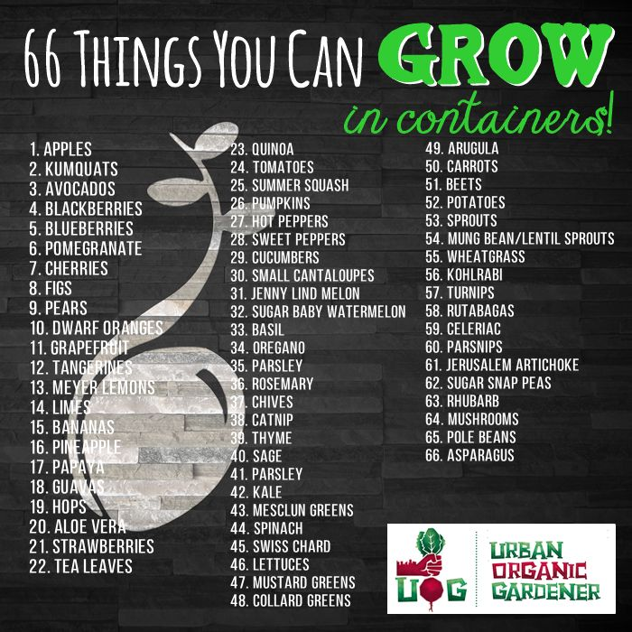 66 Things You Can Grow In Containers