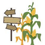 Corn Maze Corn Stalks and Sign Cutout