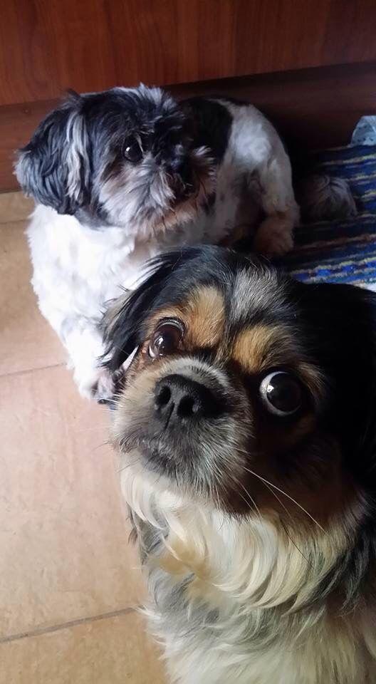 Tobia e Zoe