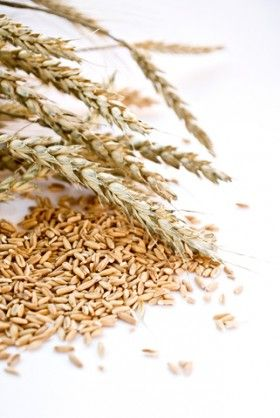 """All grains contain protein that is theoretically gluten but people with celiac disease and most other gluten allergies only react to the form of gluten found in wheat (including spelt, kamut, triticale and all varieties of wheat), barley, and rye.   While it's not really correct to refer to other grains as """"gluten-free,"""" they are free from the form of gluten found in varieties of wheat, barley, rye, and their derivatives and are safe for people with celiac disease and most gluten…"""