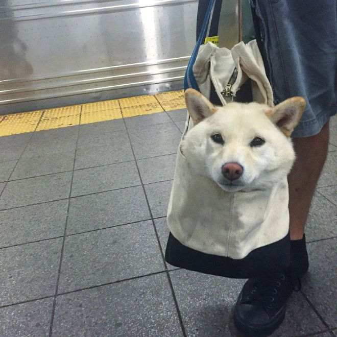 Nyc Subway Banned Dogs Unless They Fit In A Bag Dog Owners Did