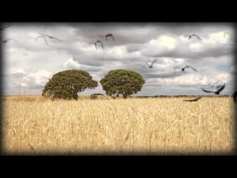 Shortfilm by Isabel Medarde and Sergio González
