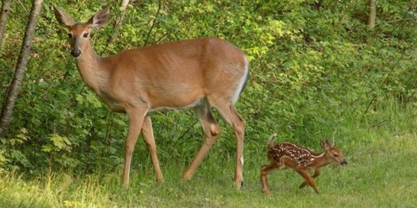 Charge Killer of Tiburon Doe and Fawn with Animal Cruelty: https://www.thepetitionsite.com/takeaction/415/439/959/