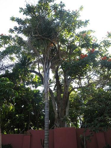 garden Harare Zimbabwe !! https://flightstoafrica15.wordpress.com/2015/08/08/tour-groups-in-harare-zimbabwe/