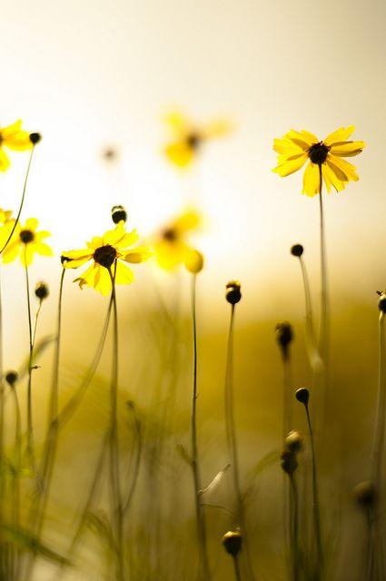 La primavera va dando fuerza  a  la naturaleza y las flores   cubren el campo