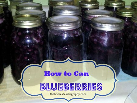Canning Blueberries-a great way to preserve berries with no freezer space!